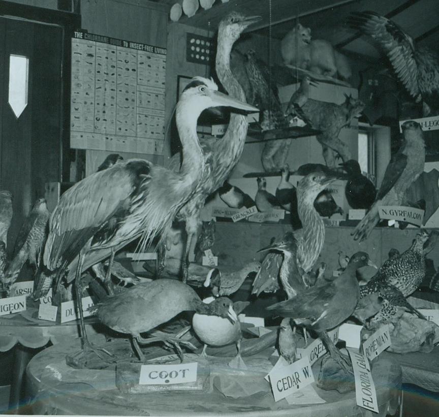 Dr. Hammond Taxidermy collection 5.jpg