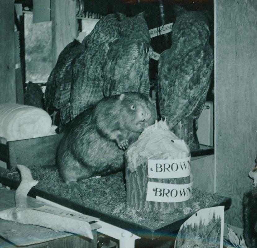 Dr. Hammond Taxidermy collection 6.jpg