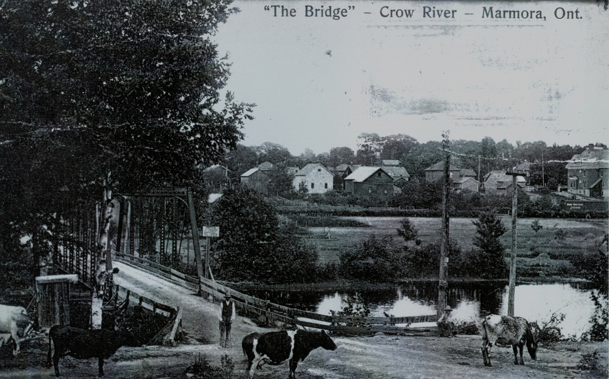 Photo of Ike Wright guarding the cows at the bridge over the Crowe Riverin 1908