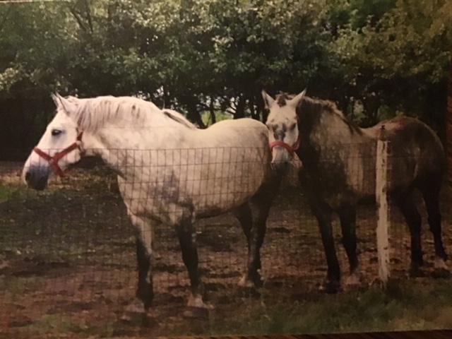 Dalton Vilneff's horses