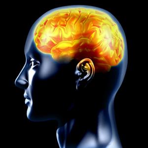 11+ CEM EXAM: Verbal Reasoning
