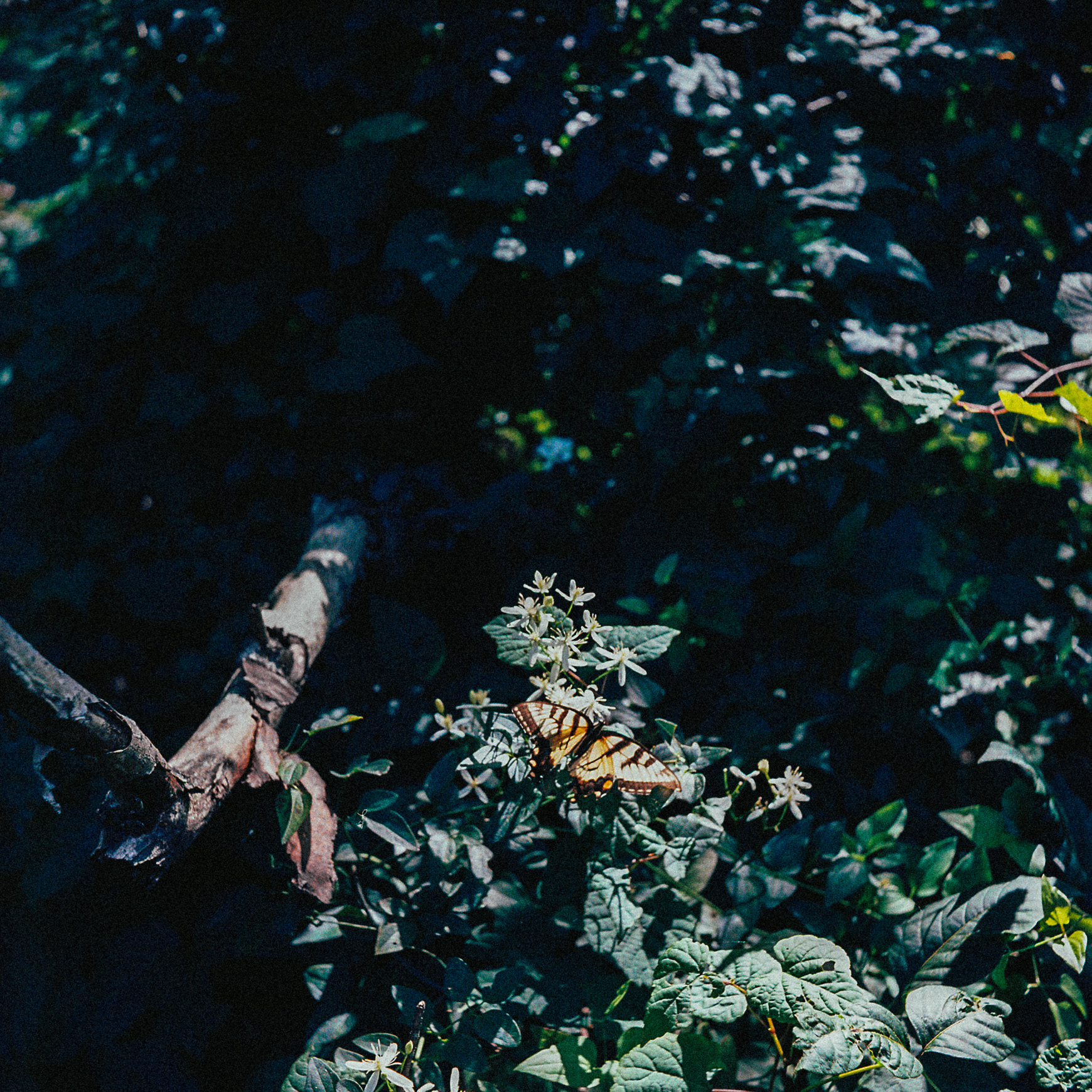 OldFilm037.jpg