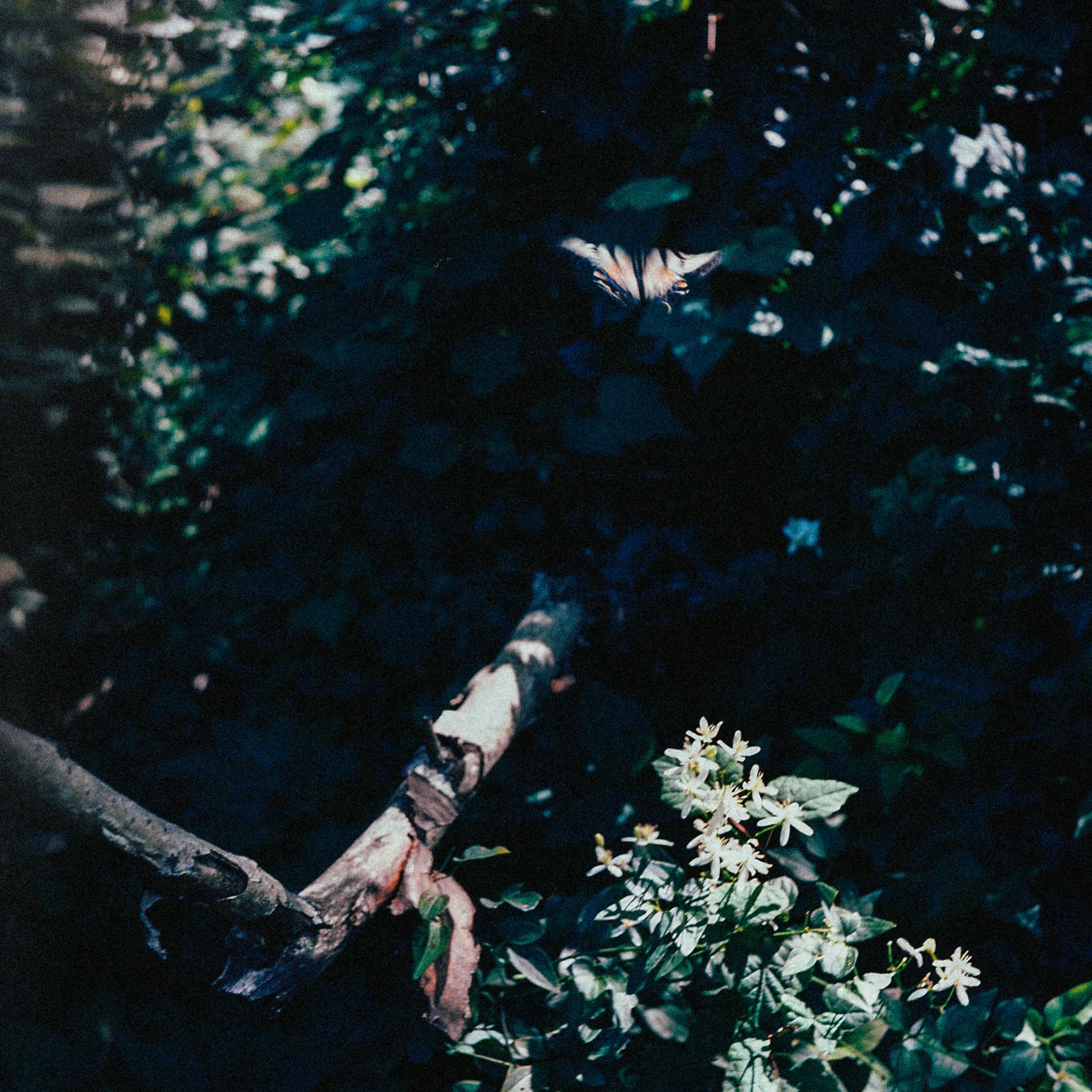 OldFilm036.jpg
