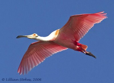 http://stokesbirdingblog.blogspot.com/2006/05/10-most-beautiful-birds.html