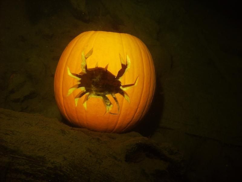 crabpumpkin.JPG