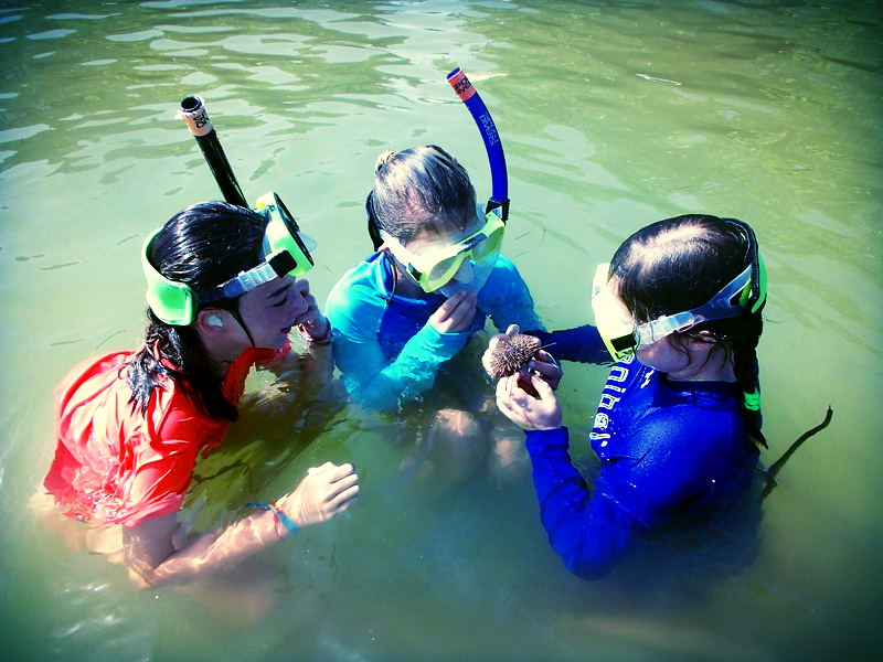 Snorkelers search for sea hares but come up with an urchin during Sea Hare Week.