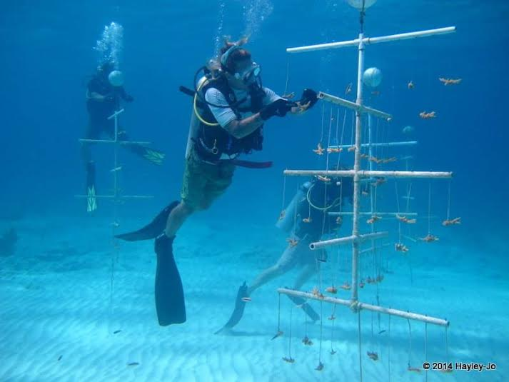 Johnny Rader :Here's a picture of me cleaning a coral nursery.I was able to help out with The Nature Conservancy's coral nursery project near Andros in the Bahamas. After a number of years of growth on the trees, the coral fragments are able to be re-planted on the reef. This is an effort to help rebuild damaged coral reefs, and it was an amazing experience to help with such an important project.