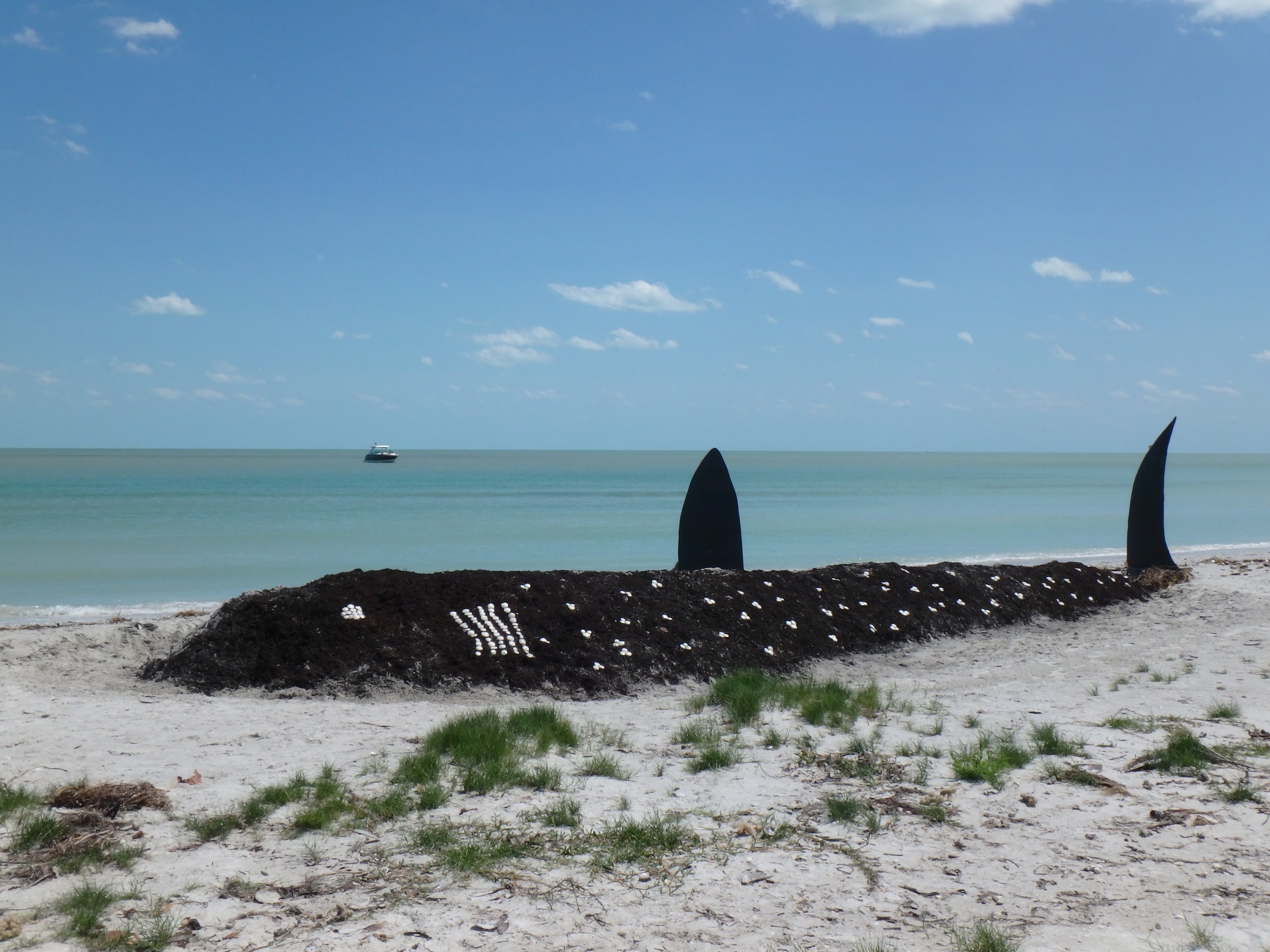 A life-sized whale shark sand sculpture built by Sanibel Sea School students for the PBS KIDS series SPLASH.