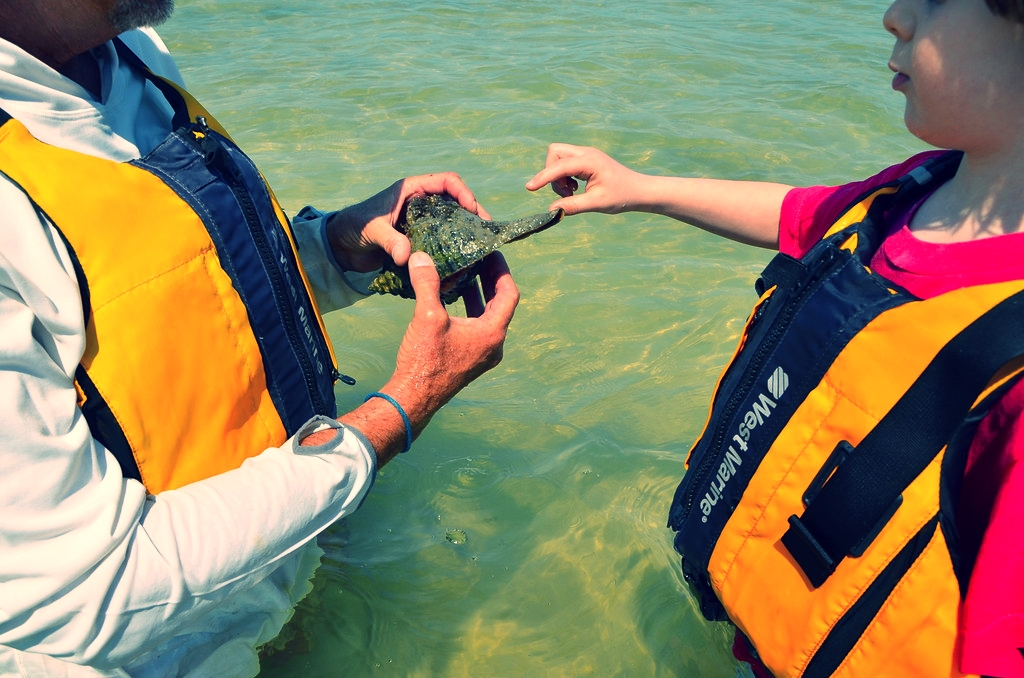 A Sanibel Sea School program participant examines a live horse conch.