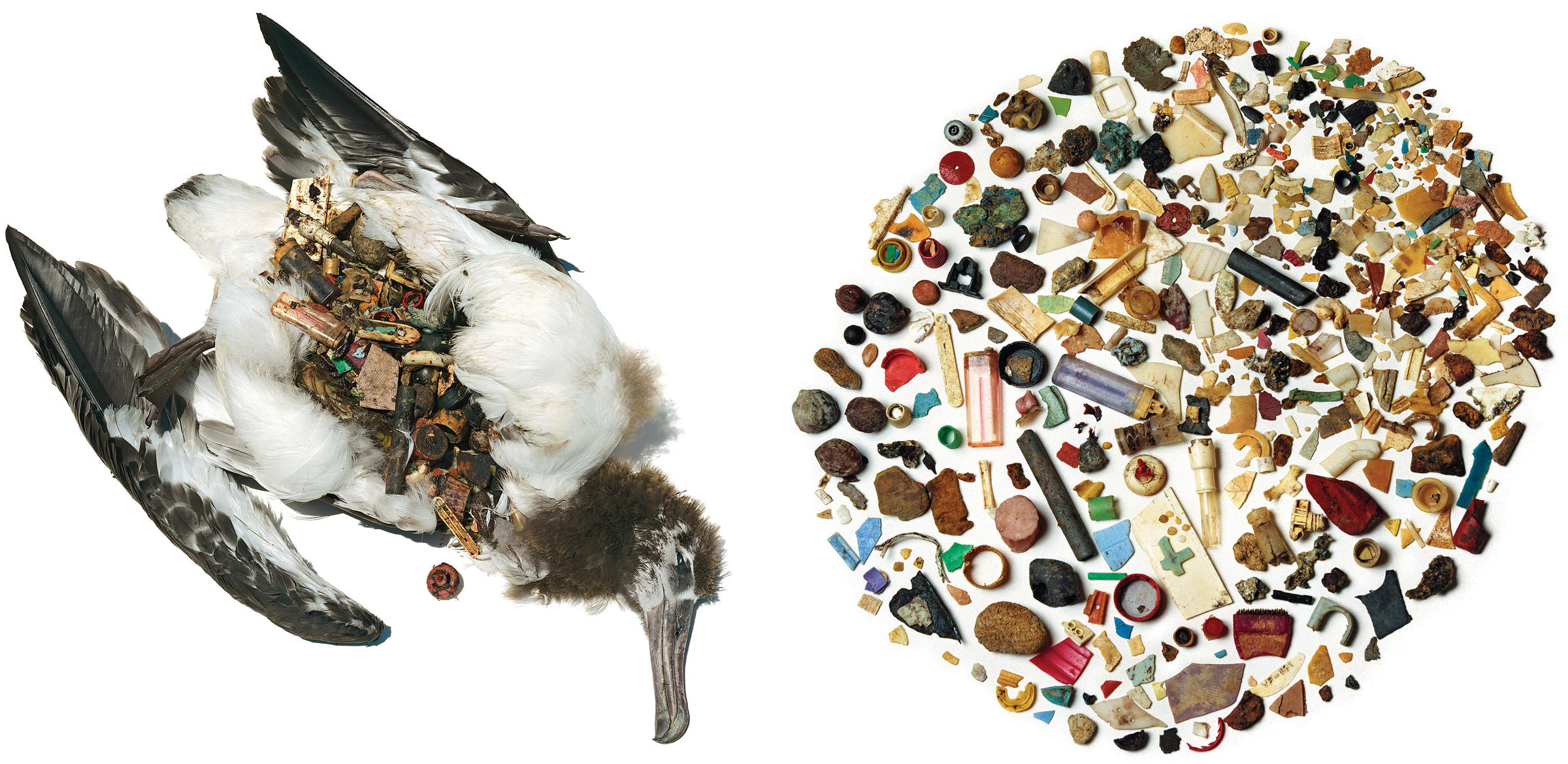 Seabirds often mistake small pieces of plastic for food, which takes a toll on the health of individuals and entire populations.