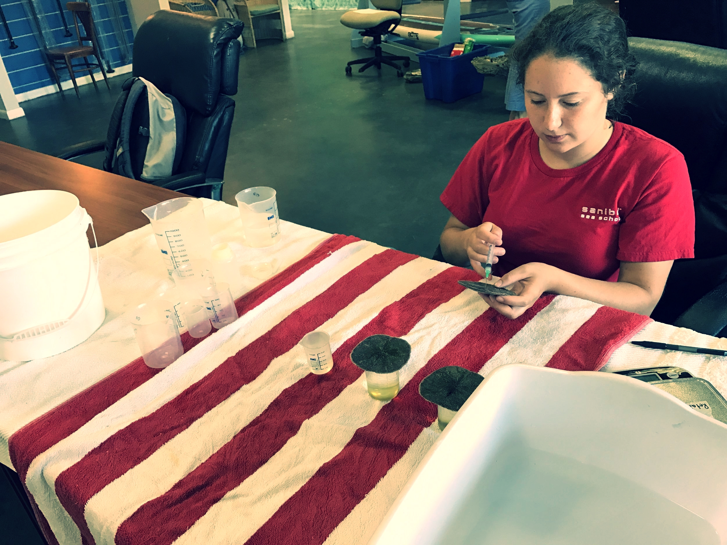 Margot Shaya assists with sand dollar research.