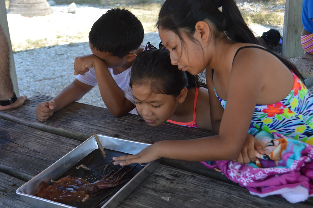 Manatee Elementary students also participated in a squid dissection lab.
