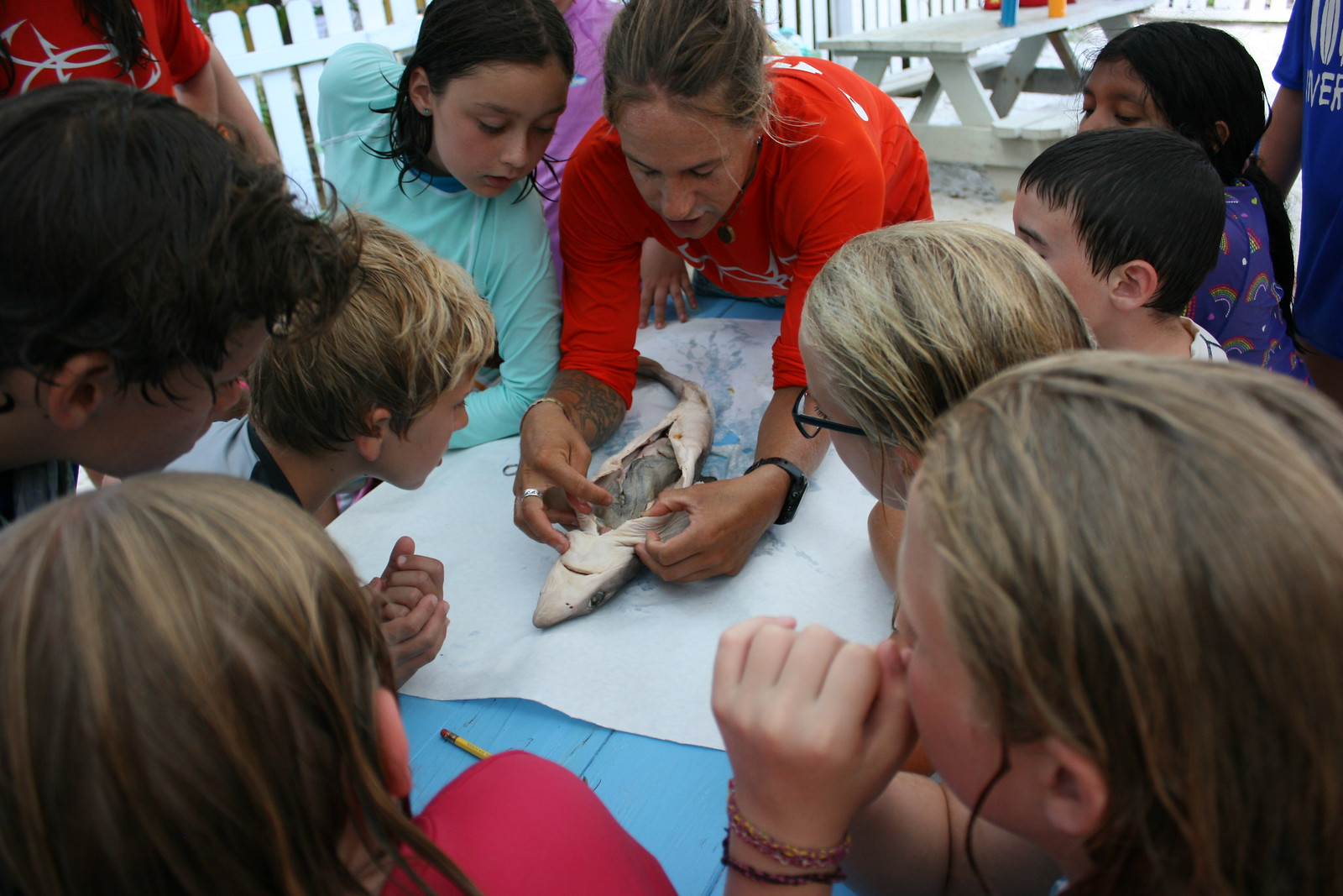 Campers dissected a shark during Shark of a Whale Week.
