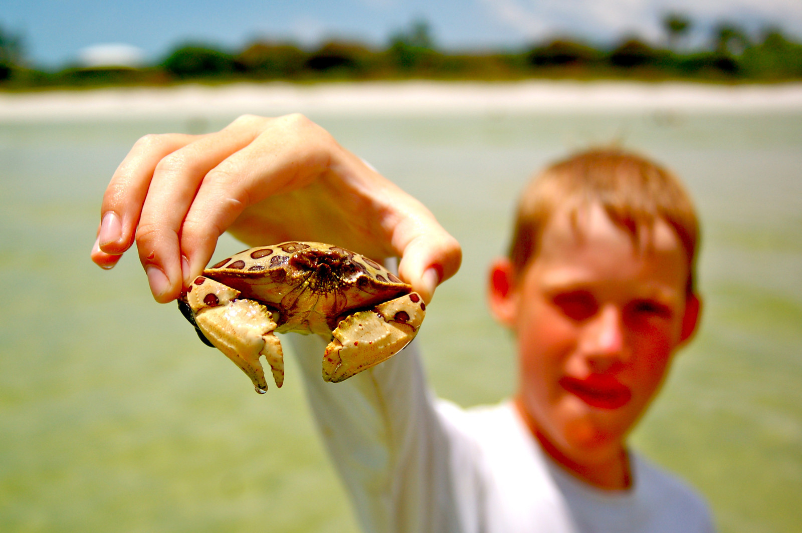 Participants in an intergenerational travel program will learn about Sanibel's fascinating creatures and ecosystems.