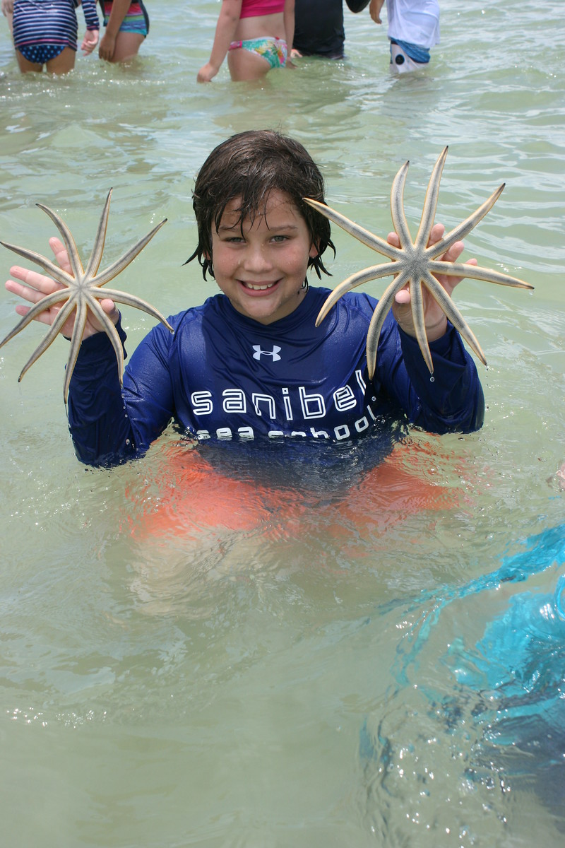 Nine-armed sea stars made a guest appearance during Pipefish Week.