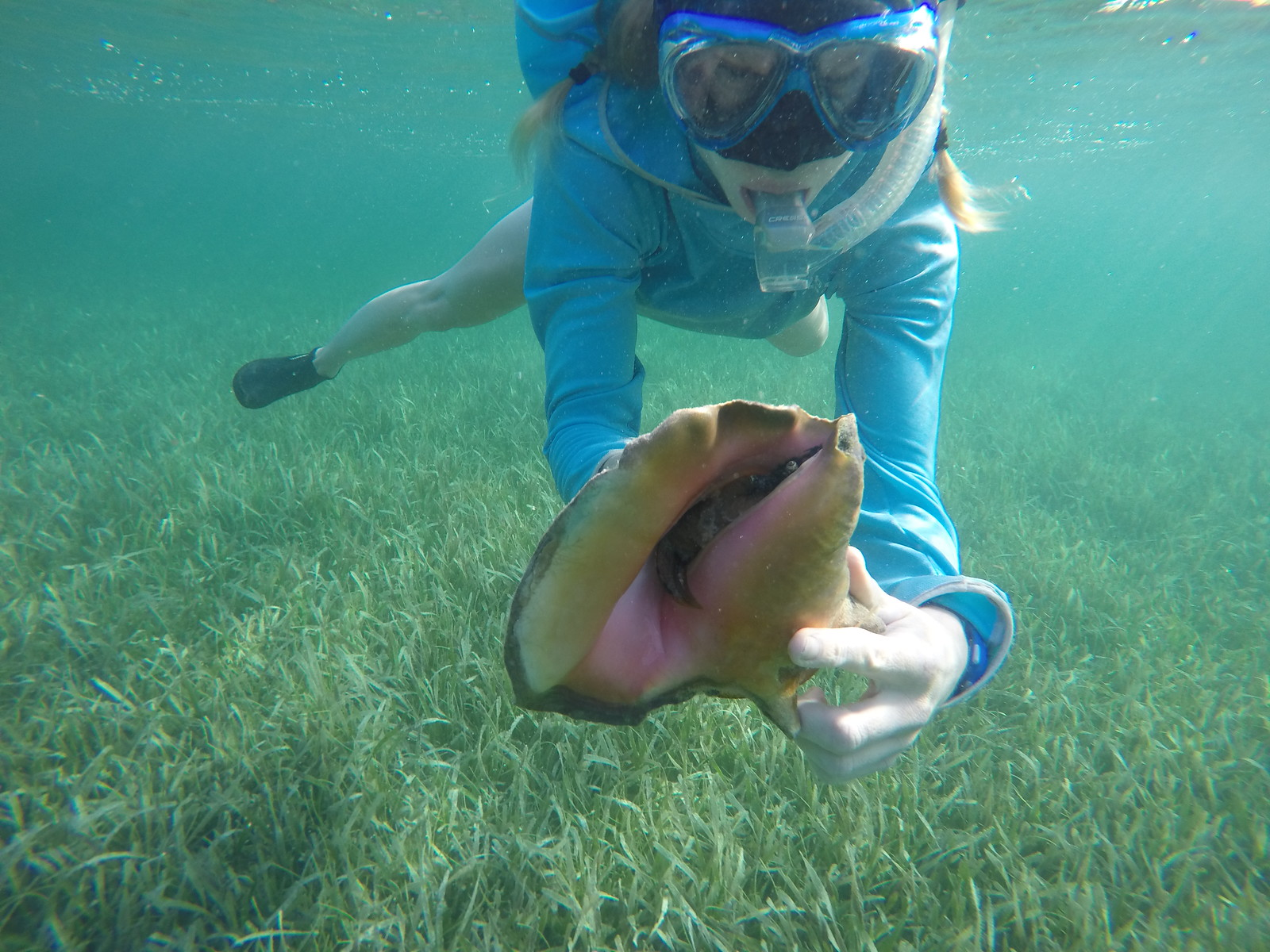 A snorkeler holds a queen conch in the South Water Caye Marine Reserve.
