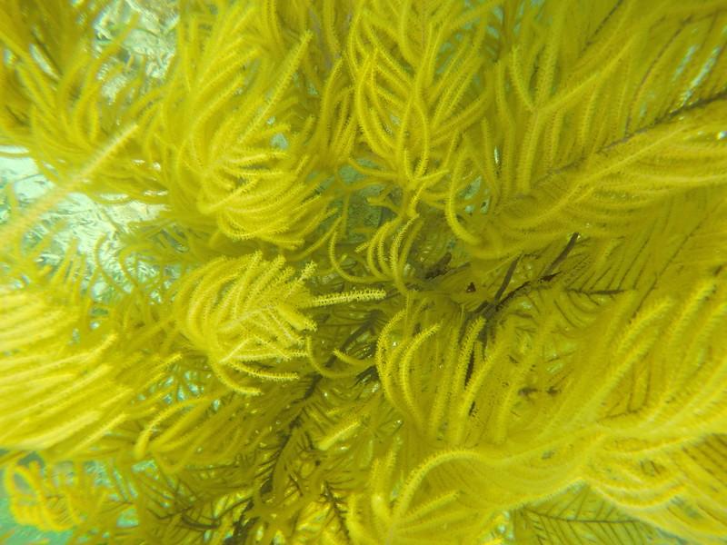 A sea plume.