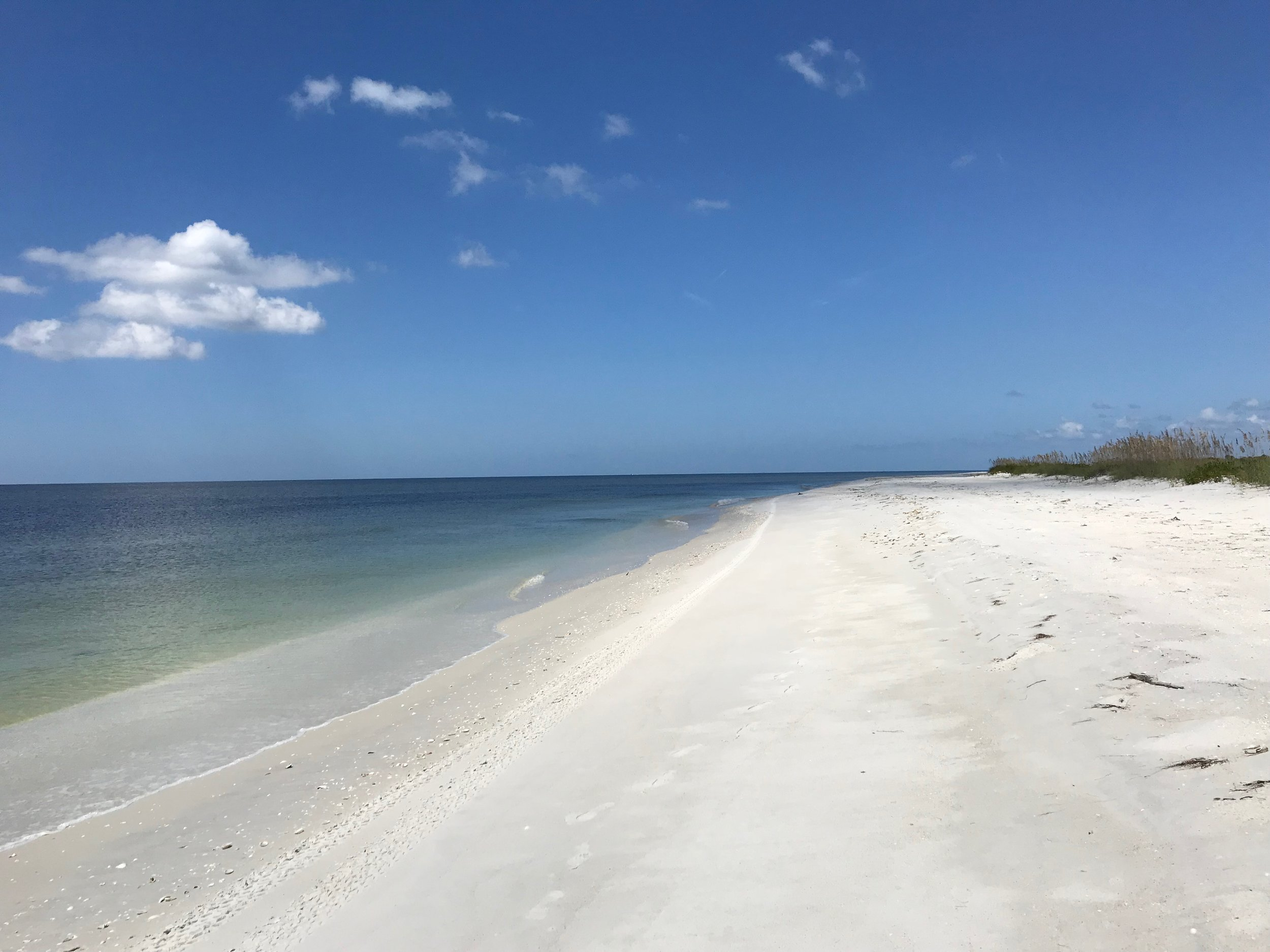 Cayo Costa's pristine beaches are perfect for beachcombing.