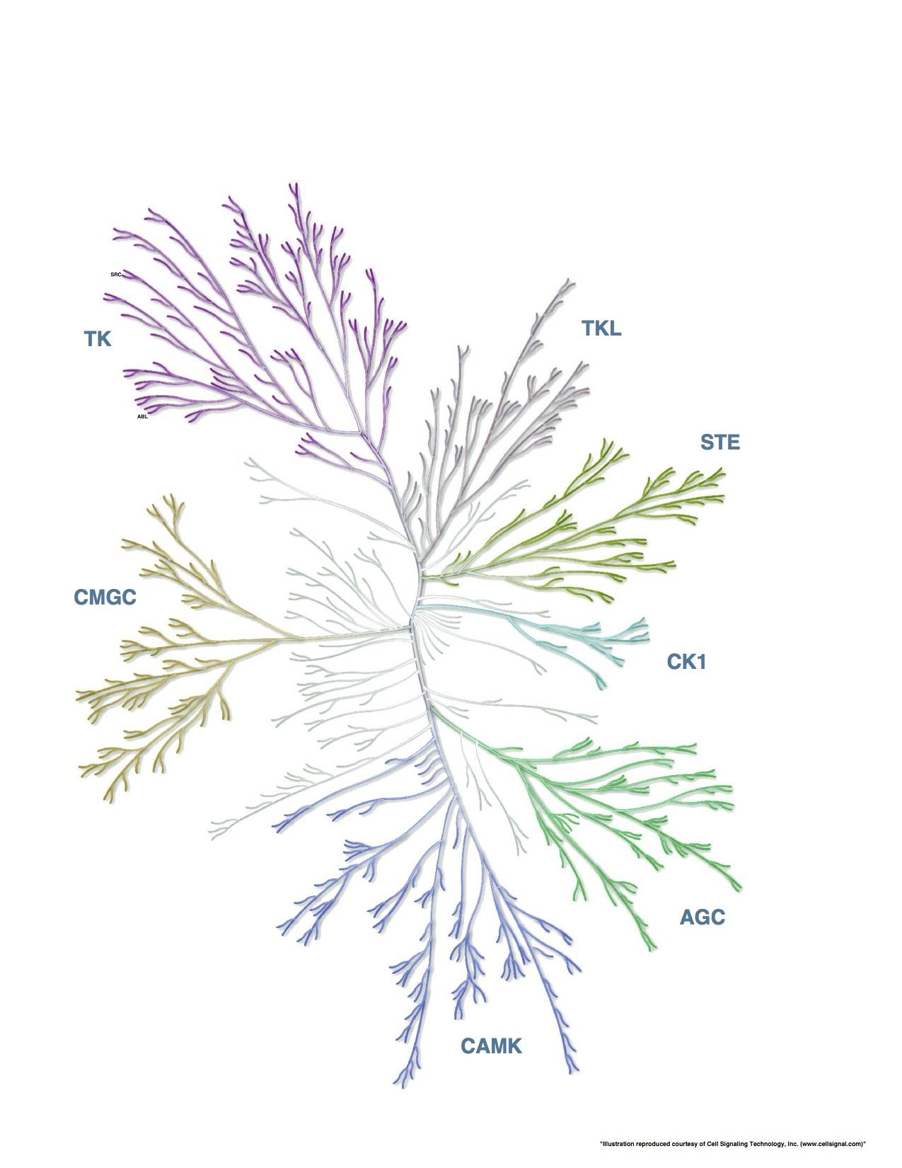 kinase-selectivity.jpg