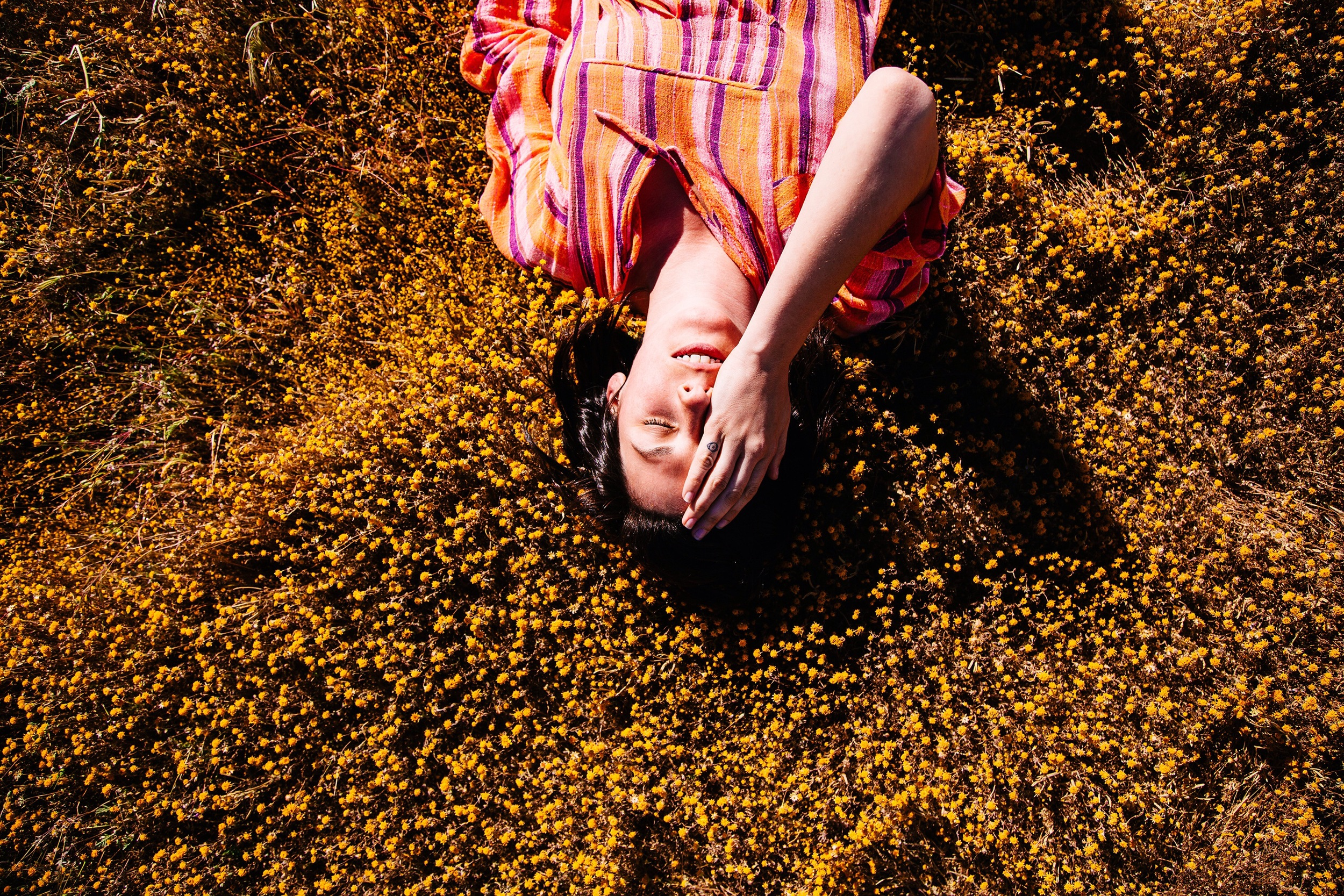 Amber in a field of yellow
