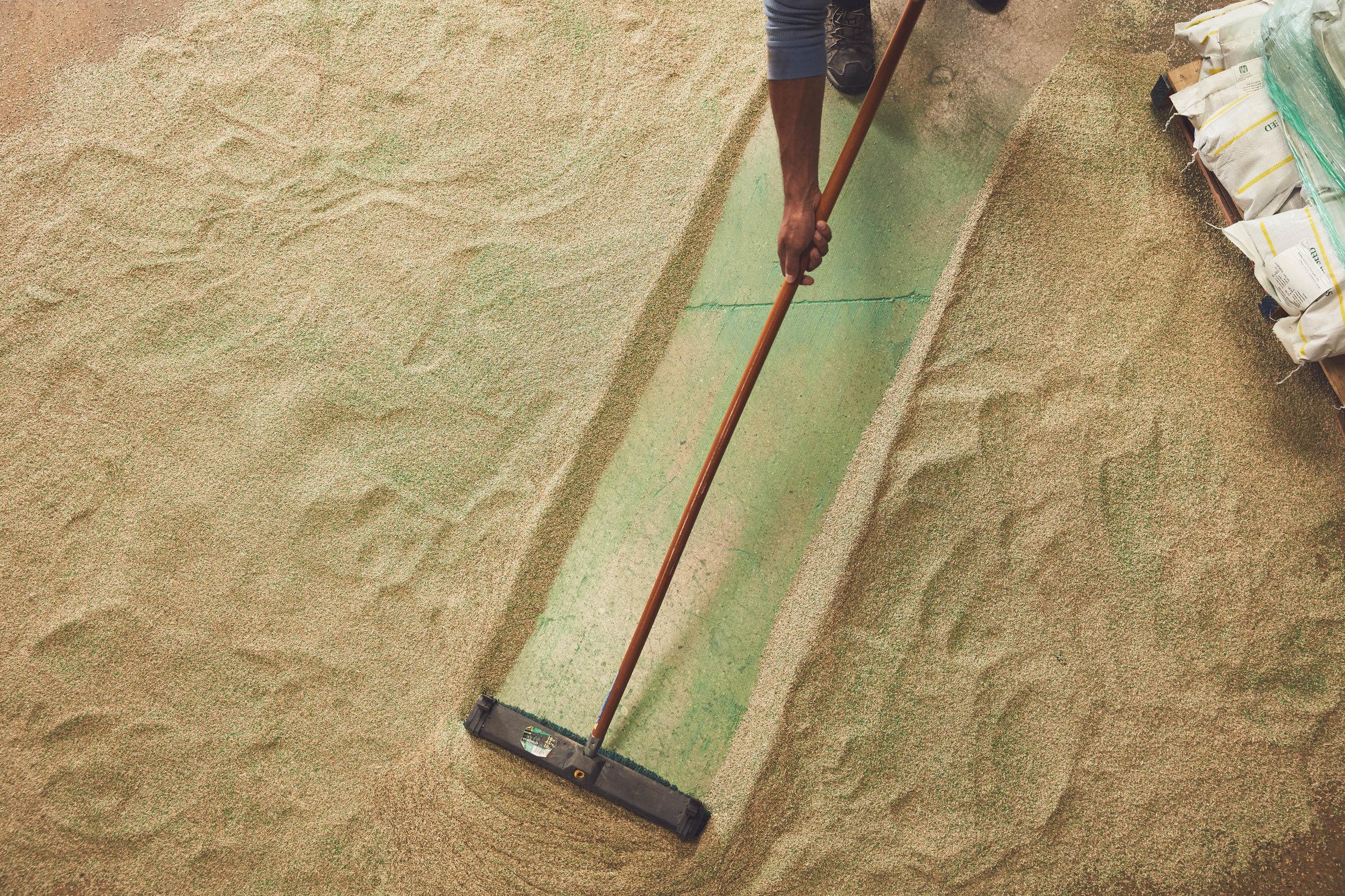 UF_Seed_Sweeping-0065.jpg