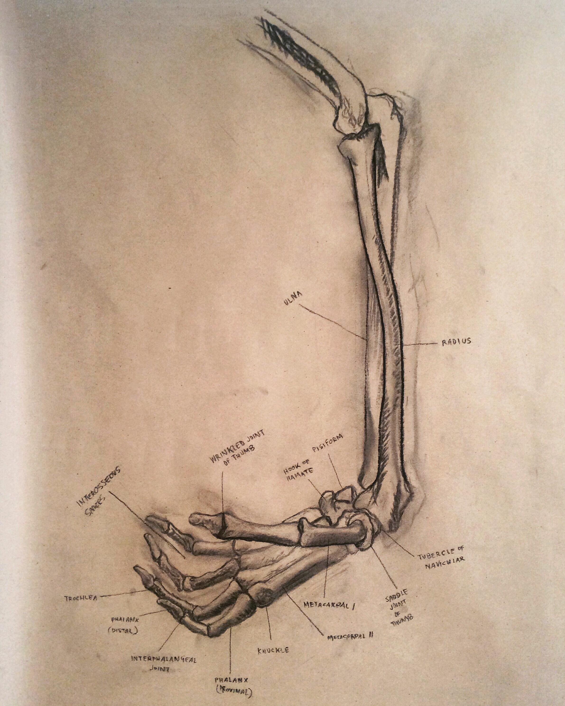 skeleton study, 2016