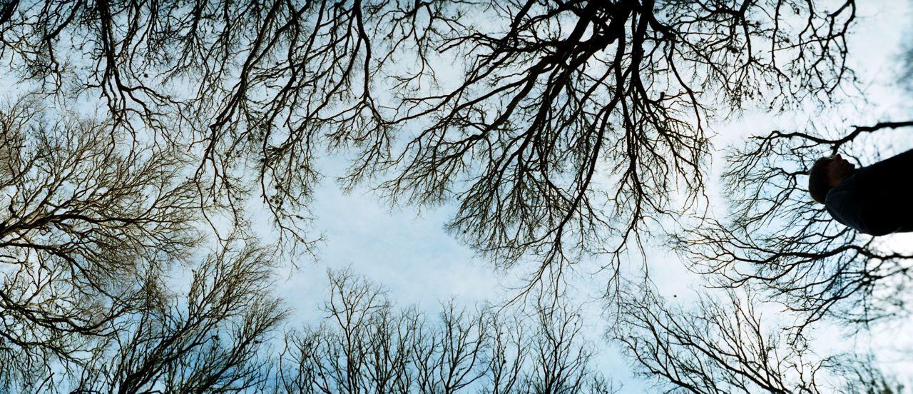 jn trees.jpg