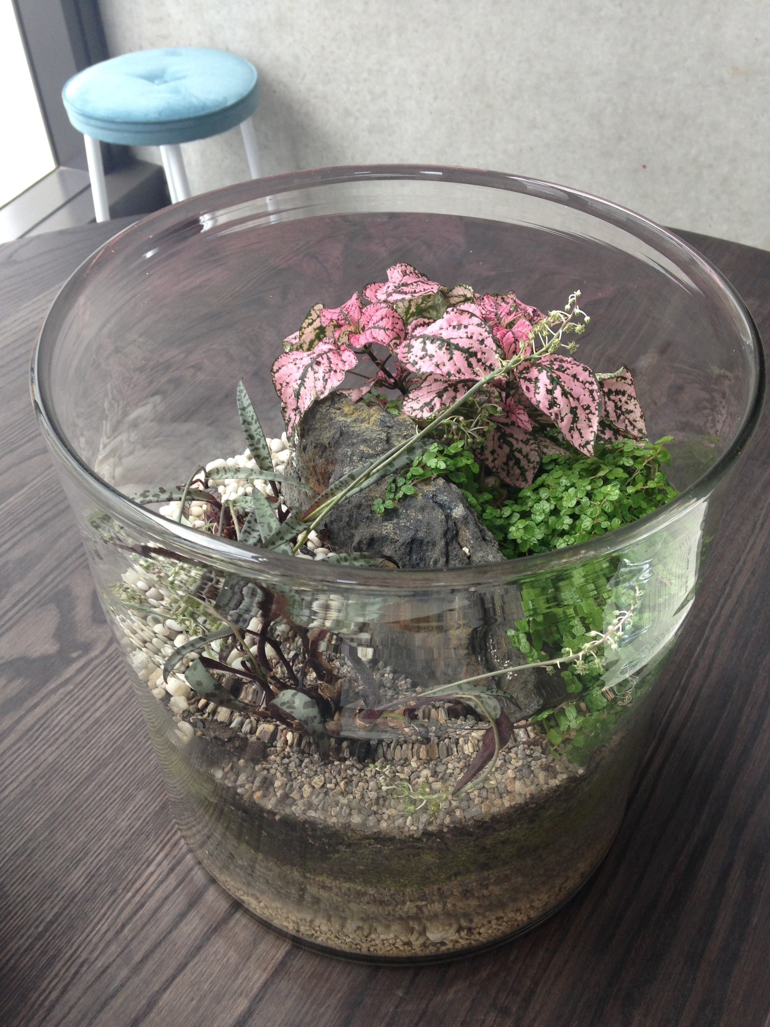 Ok I know terrariums are hip as but they are sooo purdy ^+^