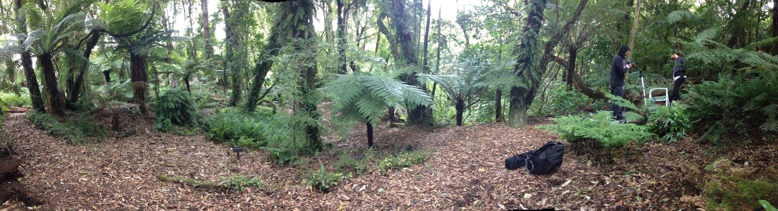 Otari Wilton Bush Reserve- the birdsong was insaaaaane!