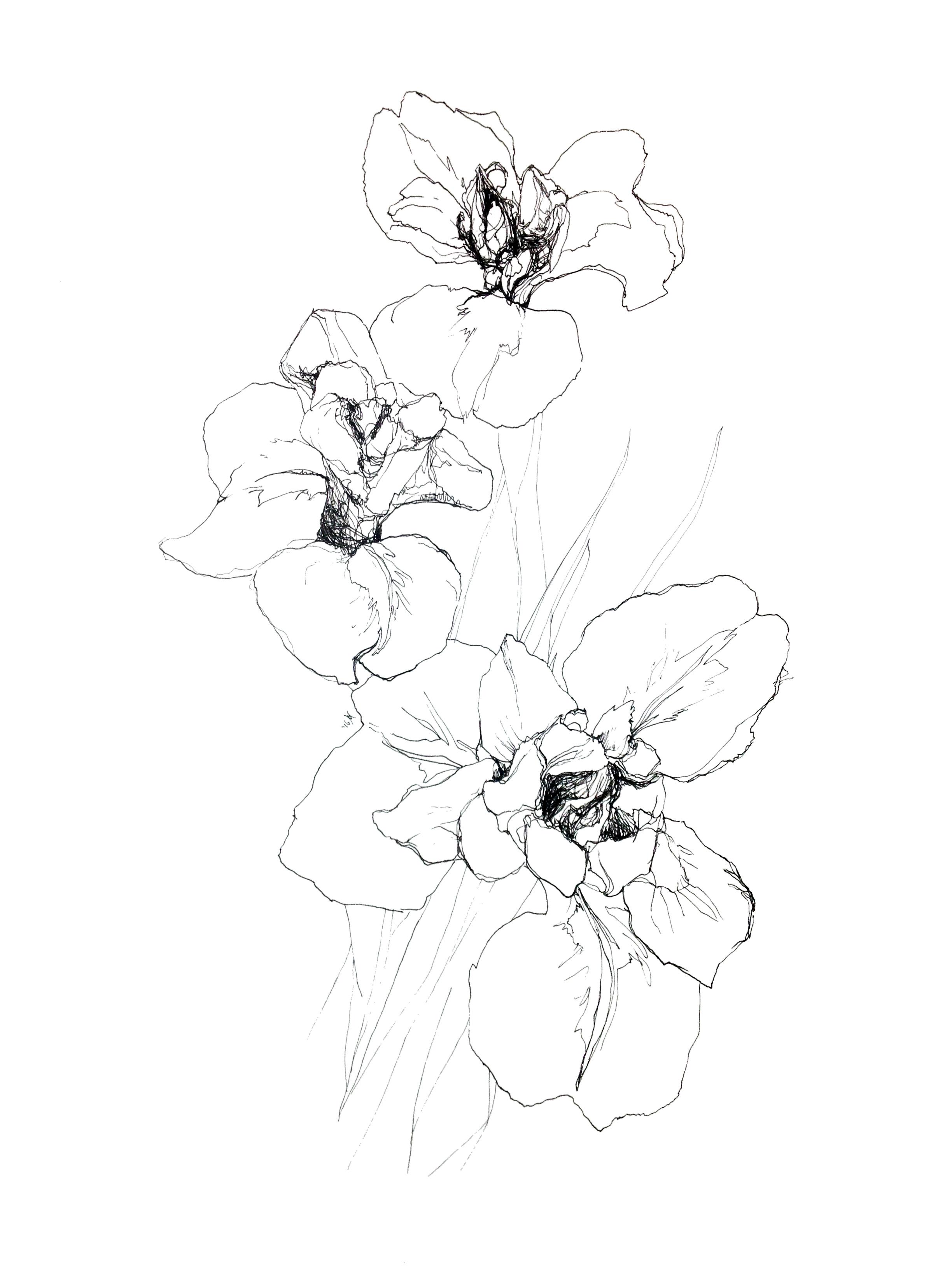 'Iris' , Staedler pigment liner, 450 x 320, 2016