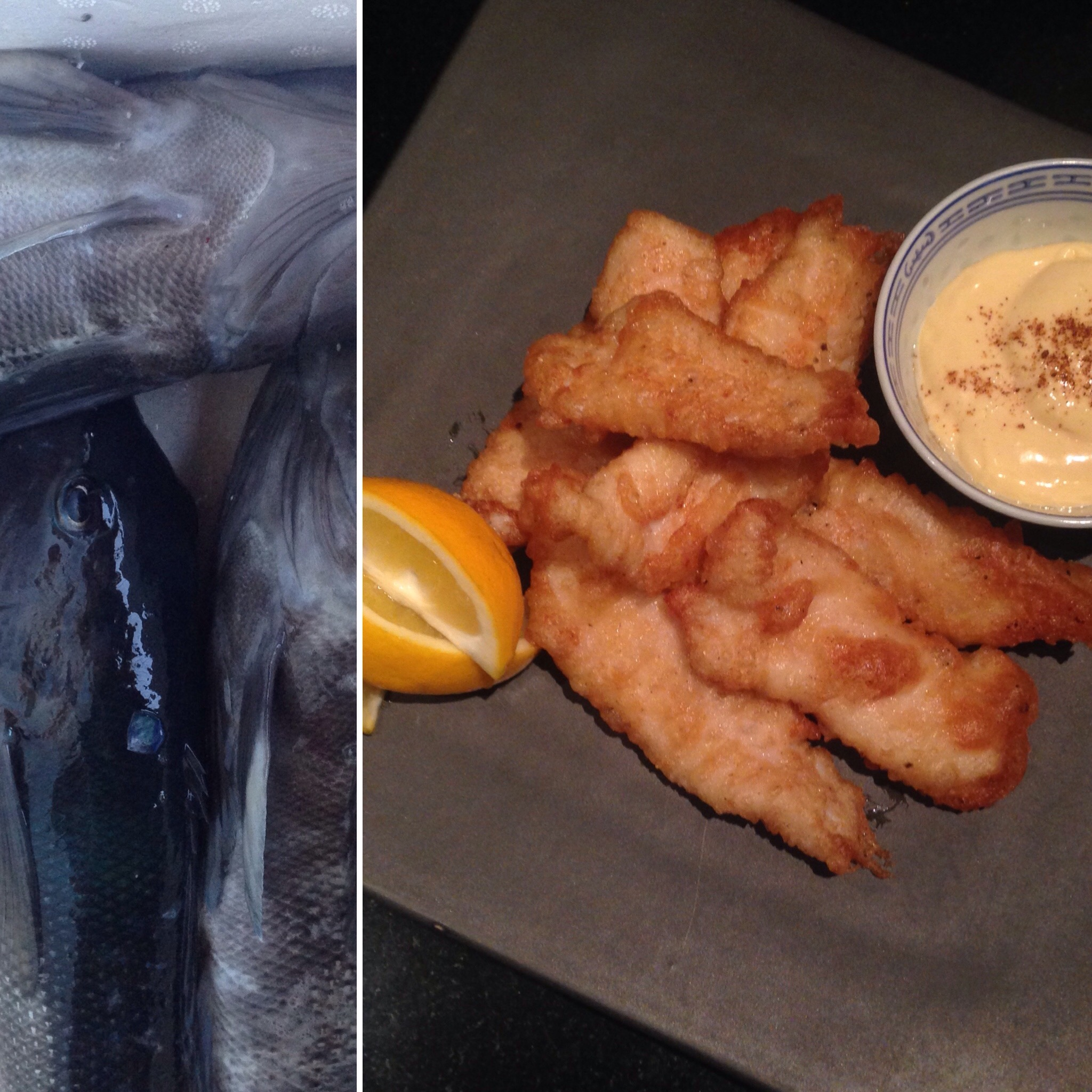 Just Caught! Blue Cod & Aoili