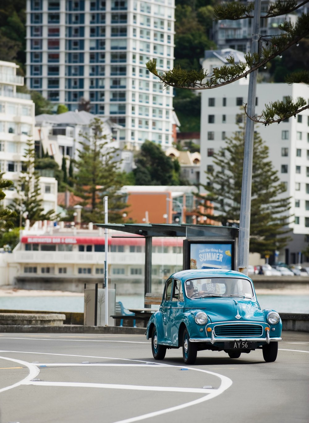 Cruising Oriental Bay  Photography  Nicola Edmonds