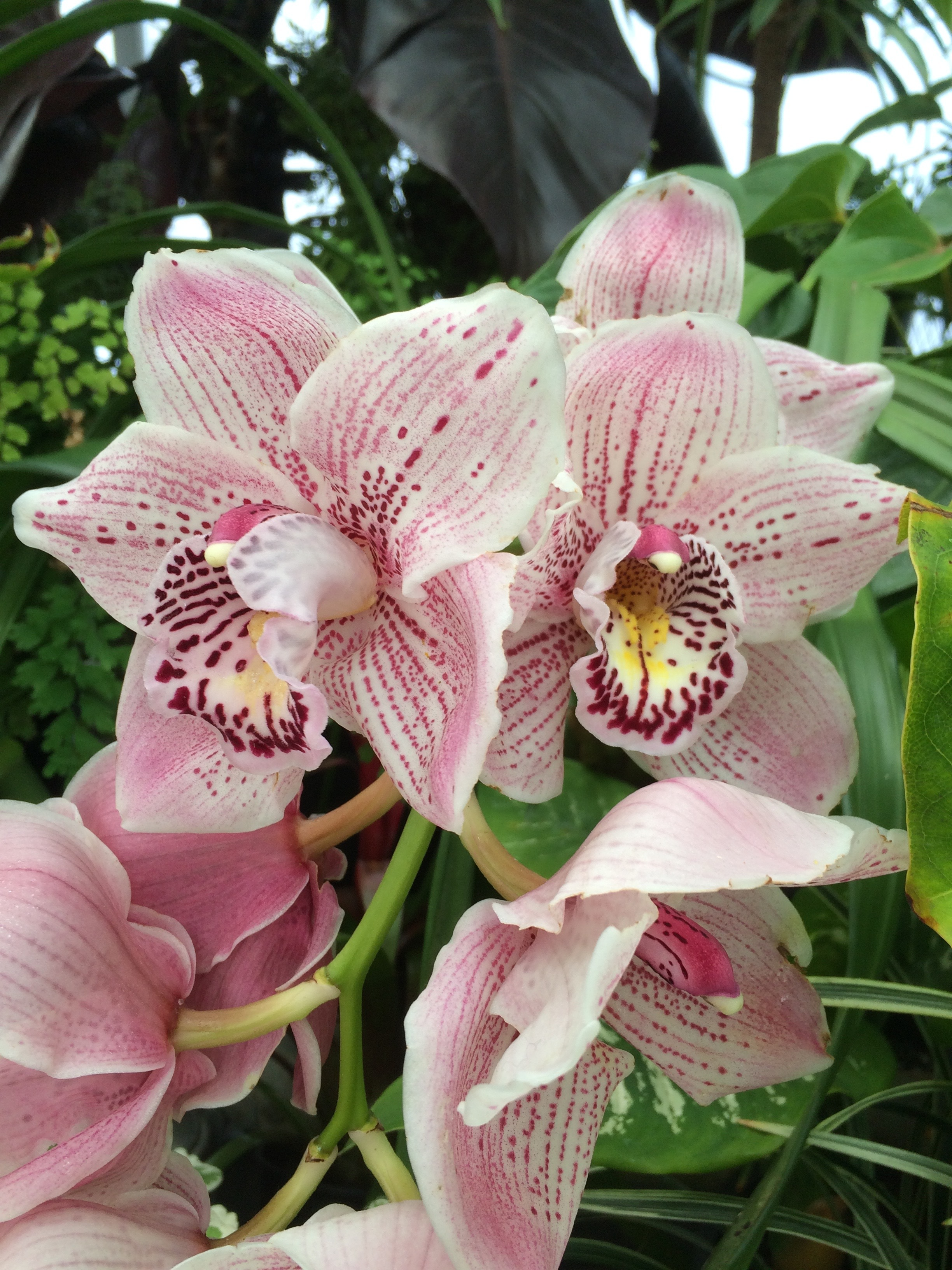 Moena's favourite orchids from her garden