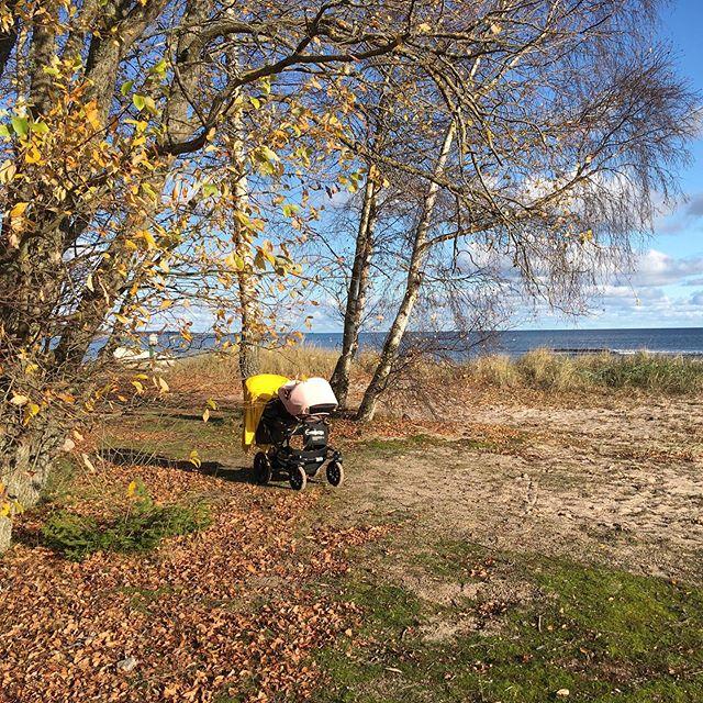 Underbara ljuvliga #gotland under höstlovet. Här återhämtar jag alltid mig själv, mitt lugn, min förankring. Är även en mycket omtyckt plats hos  lilla Nemie som trivs som bara den här. . #oktober #nemielove #höstlov 🍃🍂🌞🍂🍃