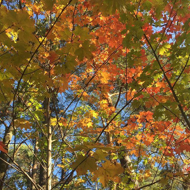 Vackra #oktober med alla dess höstfärger och så min vackra supersnälla omtänksamma kärleksfulla kloka roliga dotter ❤️💛🧡 #nemielove
