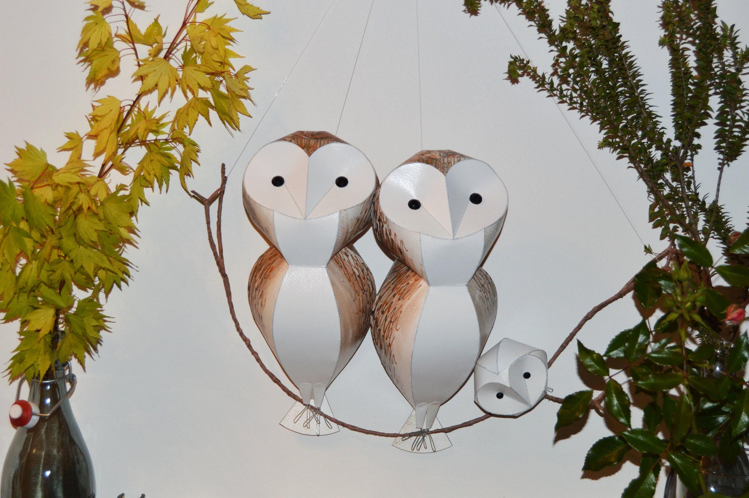 Barn Owl Parliament