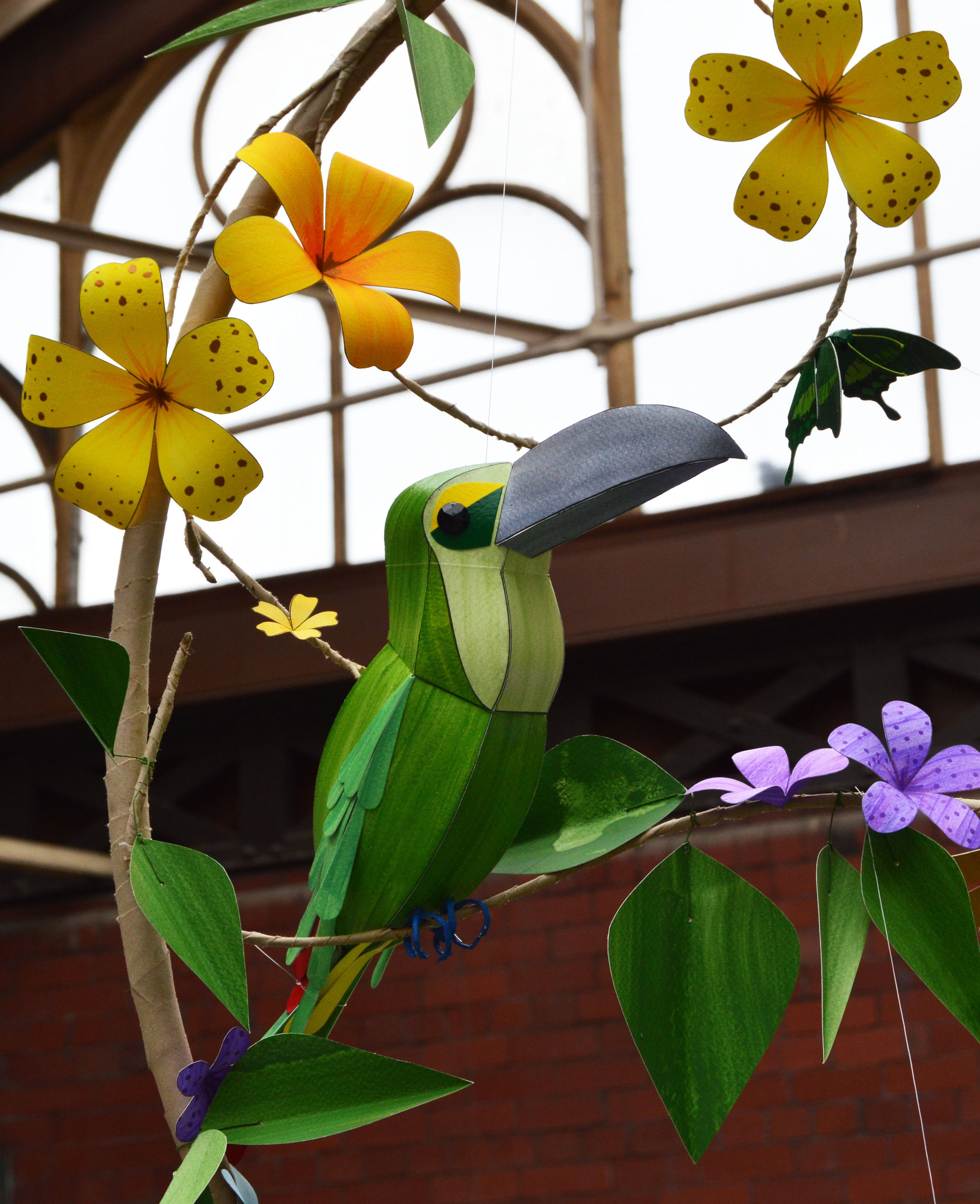 Michonne the Yellow Browed Toucanet
