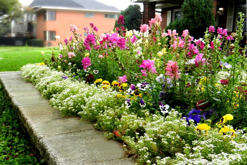 Flowerbed_1.jpg