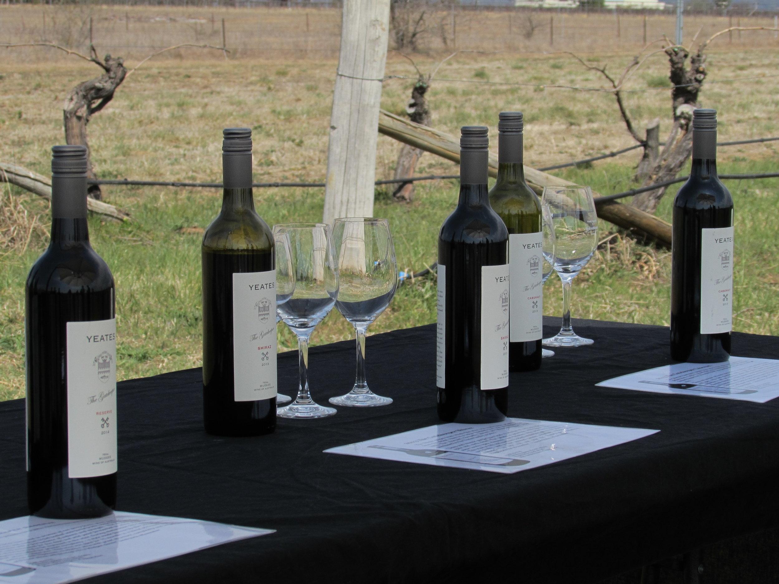 Vineyard Tour & Tastings