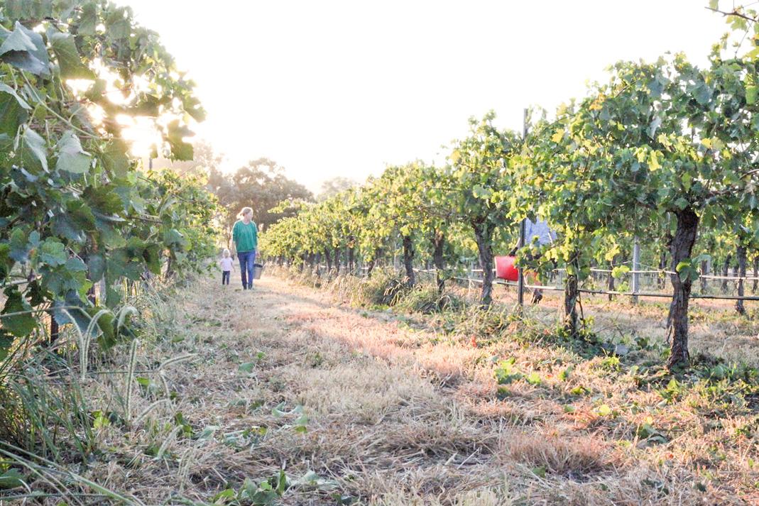 Harvest2019 (4 of 7).jpg