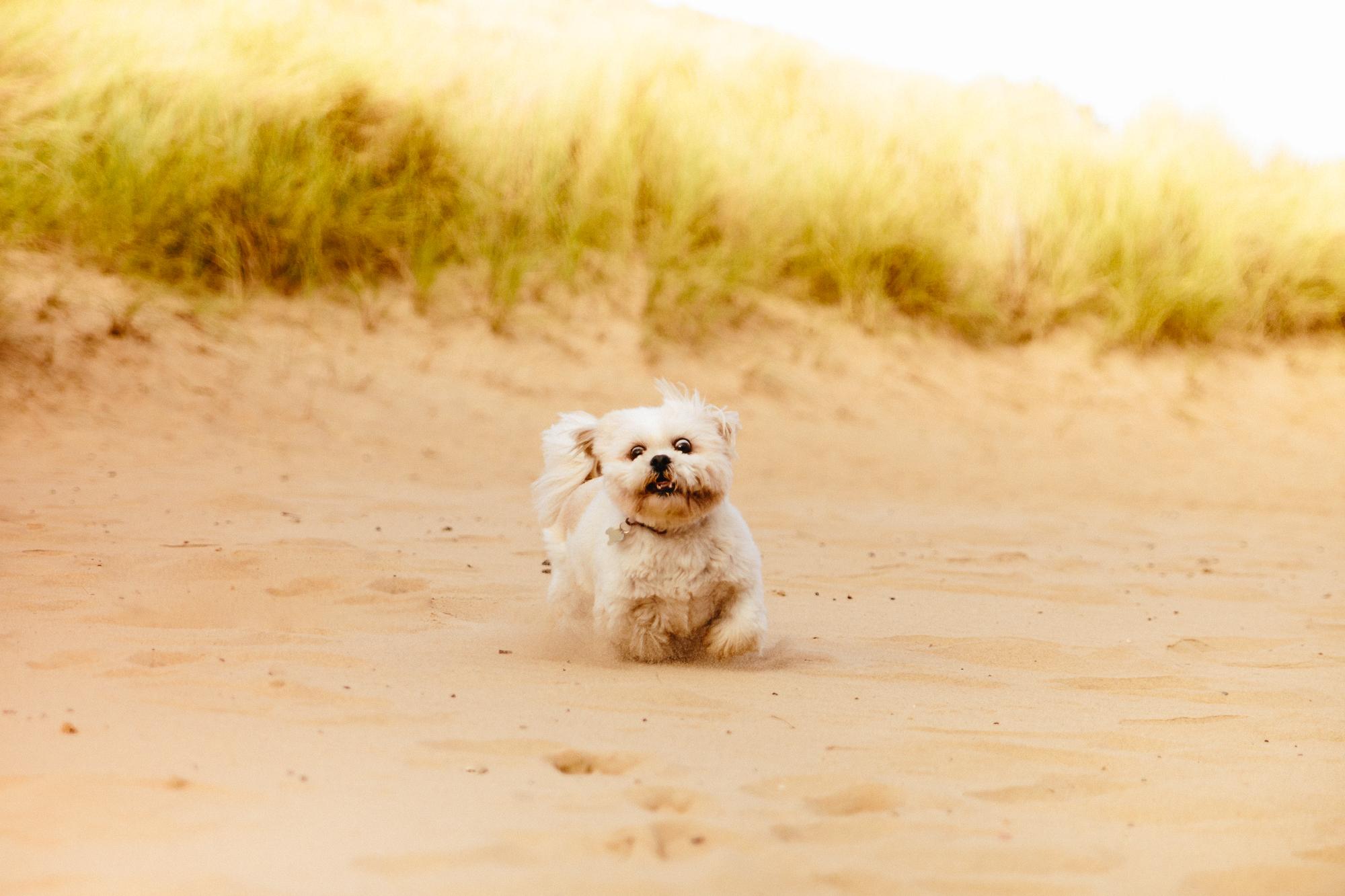 Beach-Lola-20161008-Ant Tran-3622.jpg