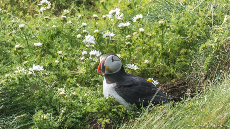 Sumburgh Head - Shetland Isles, David J Whyte, Linksland.com (1 of 1)-8.jpg