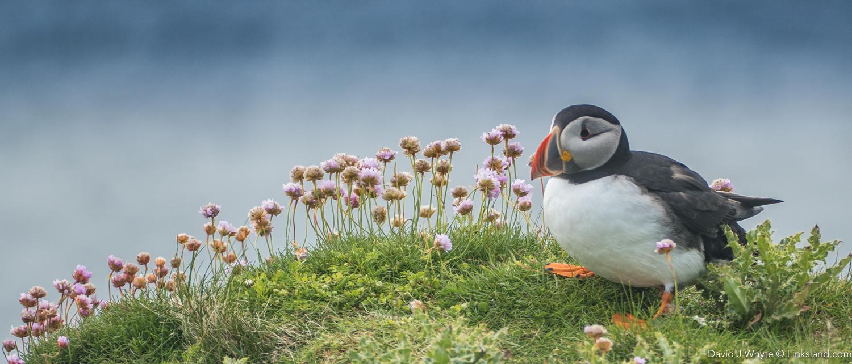 Sumburgh Head - Shetland Isles, David J Whyte, Linksland.com (1 of 1)-16.jpg