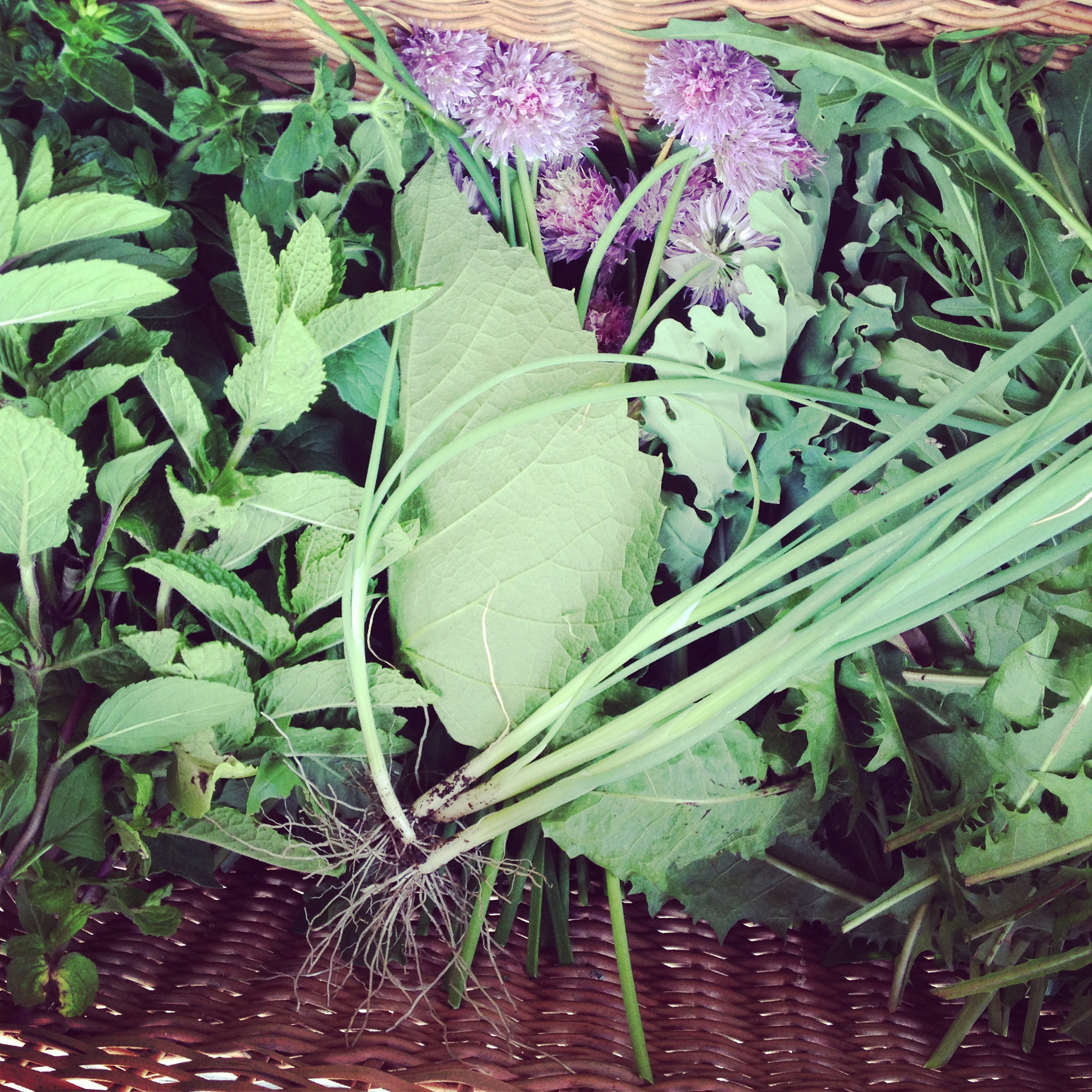 herbs in basket.jpg