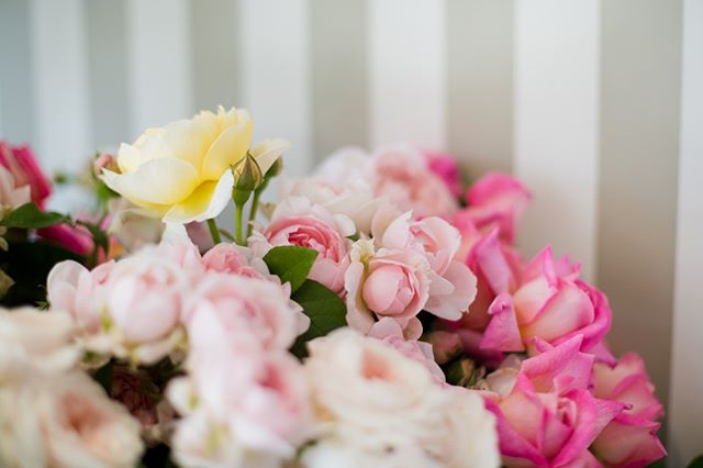Garden roses, our favourite ⁠ #theboathousegroup #theboathousepalmbeach #sydney #palmbeach #flowers
