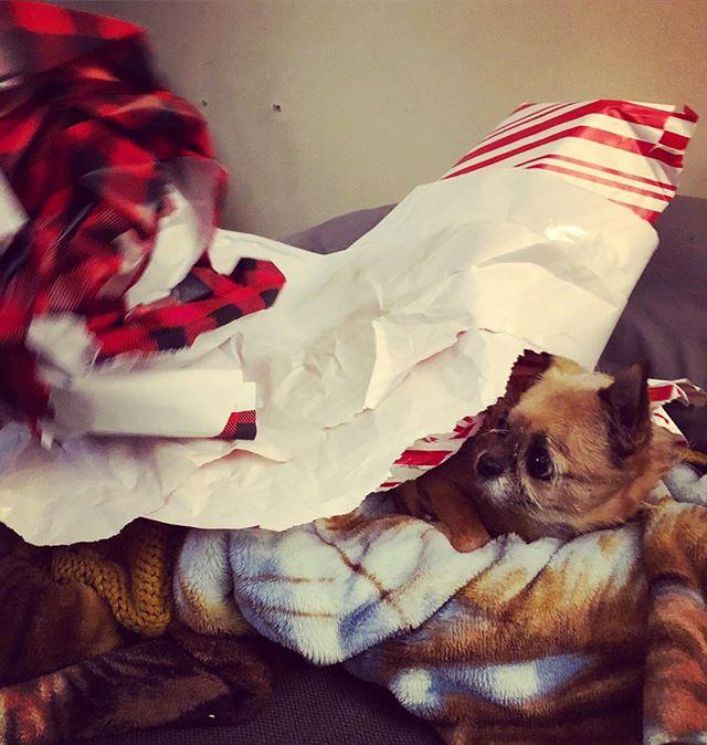 Lost under wrapping paper scraps #simonthetrashman #trashmancometh
