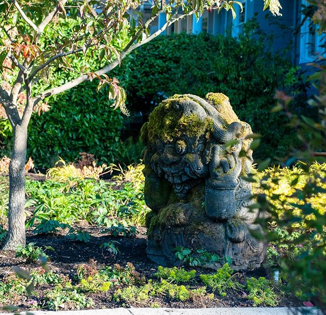 Happy Friday!  From a freshly installed garden in Montlake, design by @scj_studio . . #yardart #gardenart #ganesh #gardendesign #garden #residentialgardendesign #landscapearchitect #landscape #landscapearchitecture #plantgeek #plantlust #plantnerd