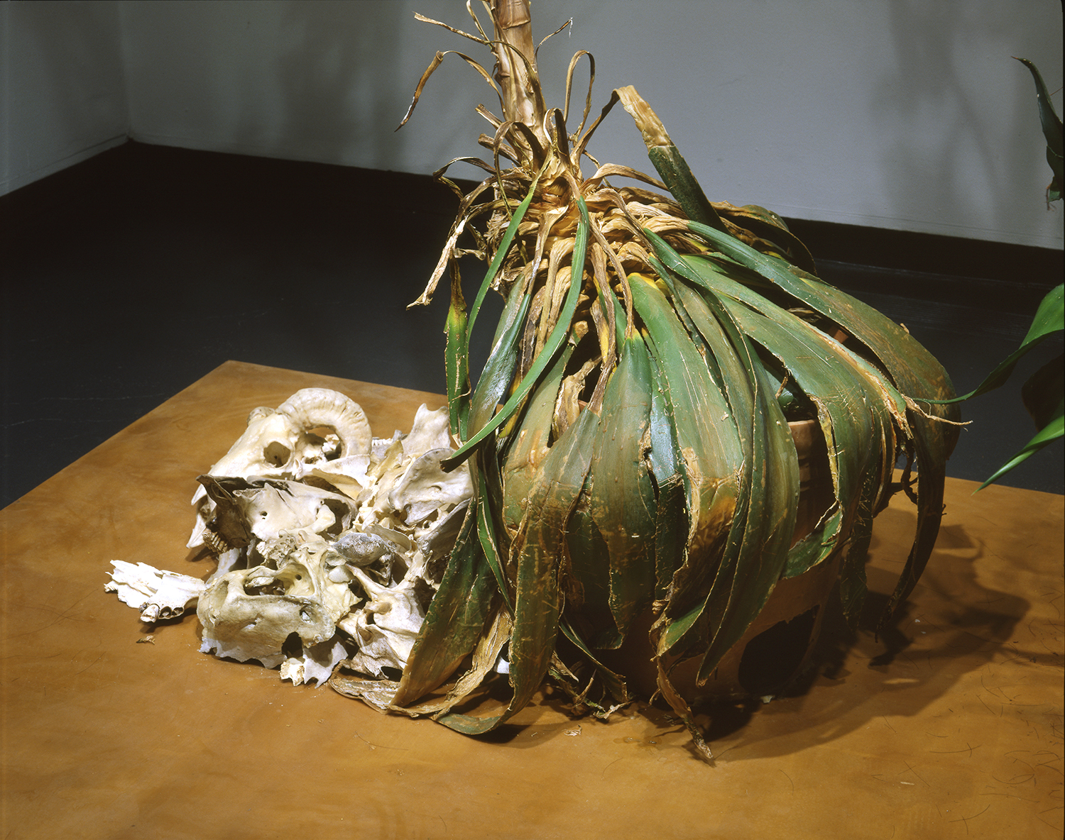 Agave Installation - Detail View