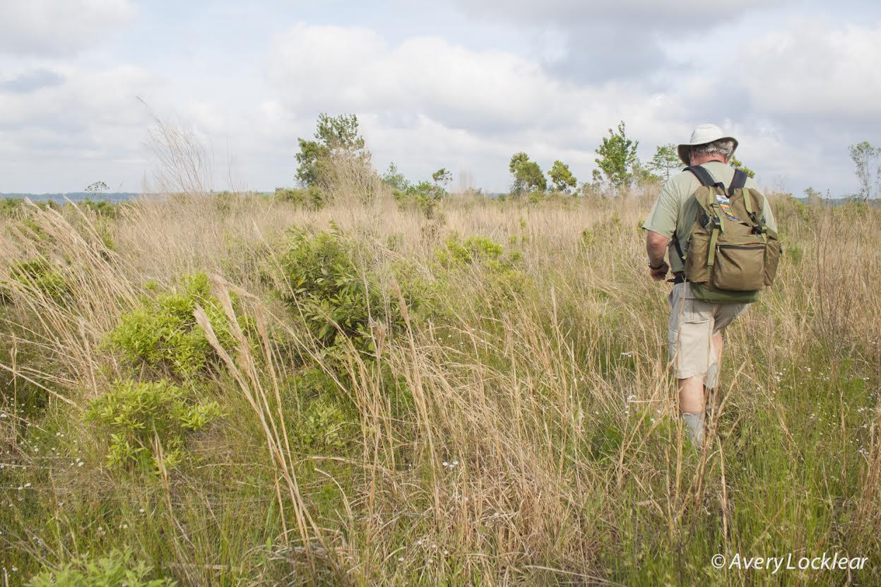 Foothills Outings Leader, Henry Fansler, crossing Pond Pine Wilderness