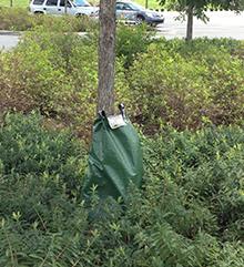 Watering Bag